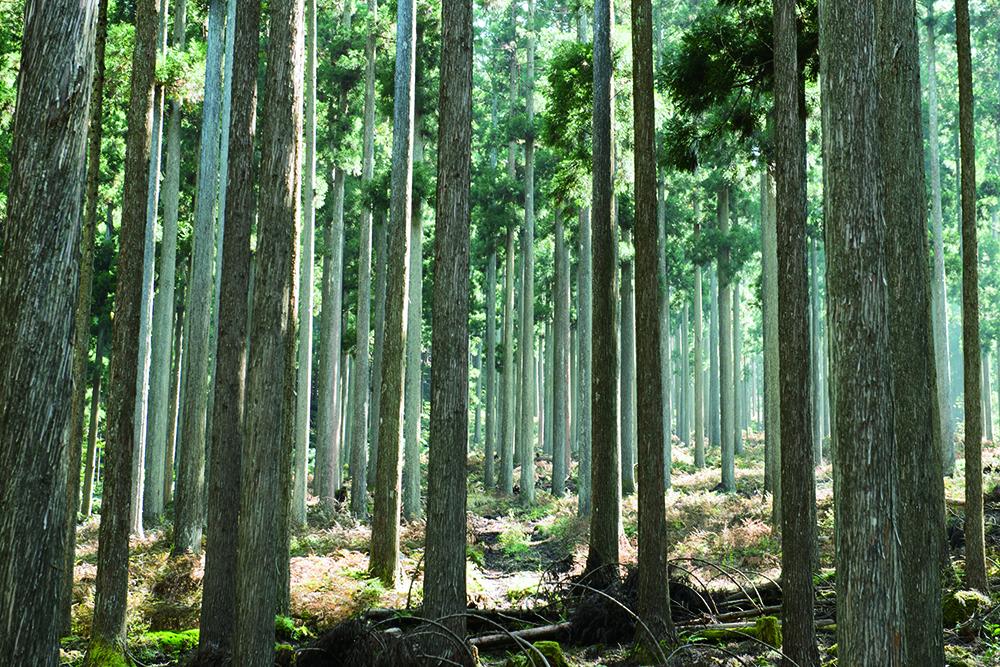 森の学校 西粟倉
